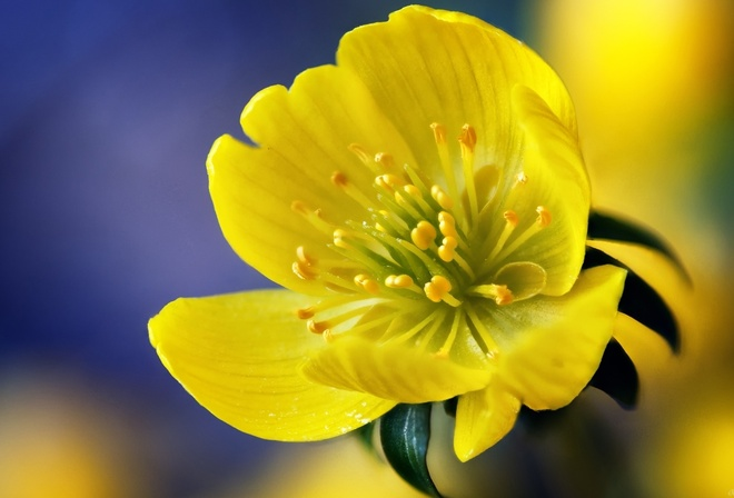 Фото шикарных цветов в отличном качестве