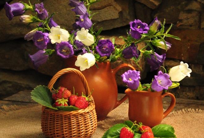 Природа цветы цветок колокольчики