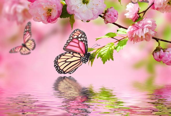 природа и цветы обои на рабочий стол