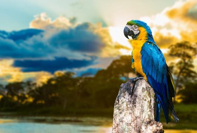 Картинки на рабочий стол попугаи на природе