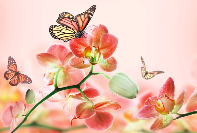 Фотошоп бабочки розовый фон цветы