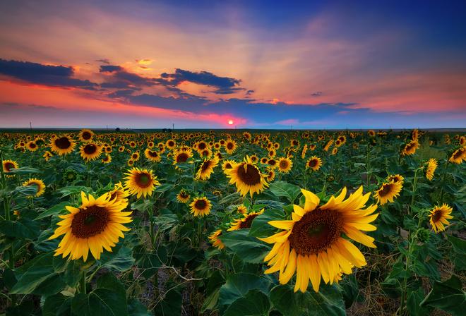 Картинки про природу украины