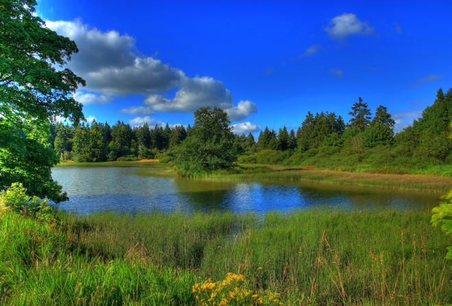 Лес деревья река озеро трава пейзаж