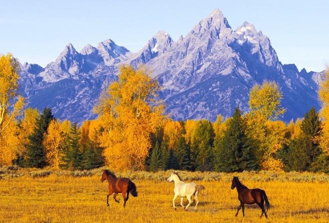 Картинки девушка на лошади осень рабочий стол