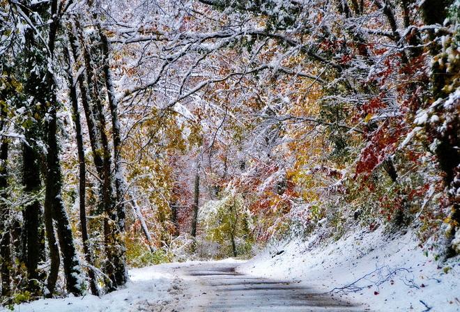 обои природа зимой для рабочего стола