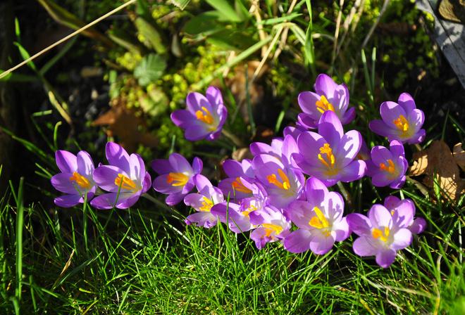 Фото тема природа весна позитив