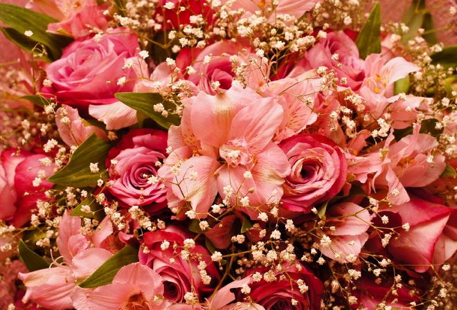 картинки на рабочий стол цветы самые № 517240  скачать