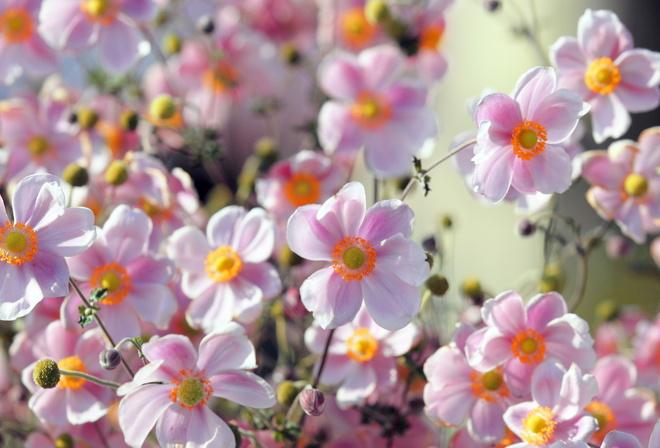 картинки на рабочий стол летние цветы красивые № 260286 без смс