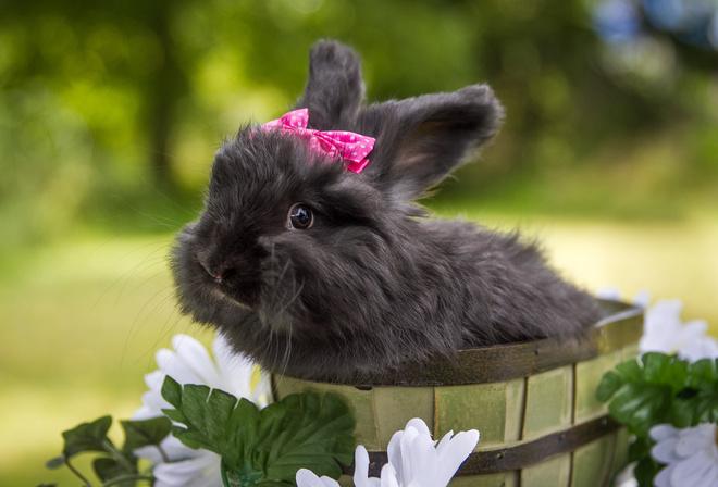 кролик животное