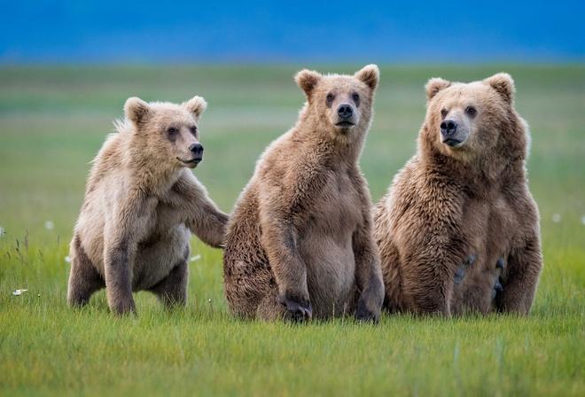 три медведя картинки раскраски