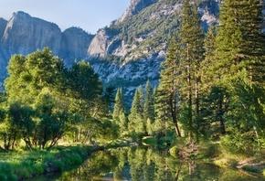 Качественные фото леса с красивыми деревьями.