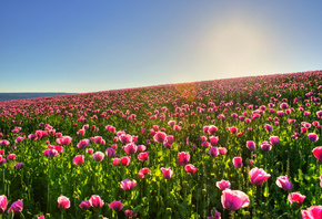 HD wallpaper Flowers wallpapers, pictures, wallpaper, nature, field, sun, beautiful pictures, flowers, photo