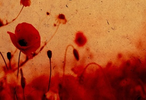 HD wallpaper wallpapers texture, color, effect of paper poppies, flowers, photo
