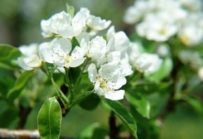 весна, цветы, красота