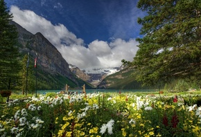 Lake Louise, Banff National Park, Canada, Канада, горы, озеро, цветы, дерев ...