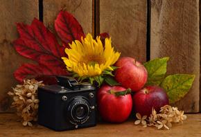 Обои яблоки листья осень на рабочий