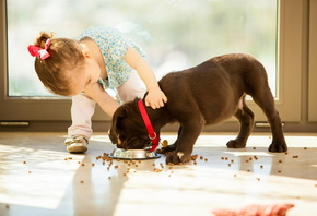 girl, dog, food, child, house