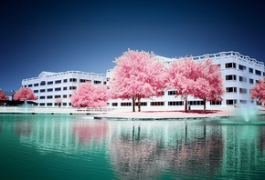 pink, trees, water, fount, building, sky