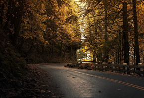 road, dark, autumn, tree, leaves, forest