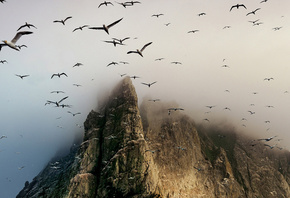 birds, mountain, fly, sky, clouds