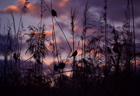 nature, Birds, Sparrows, sunset, serena pirredda photography