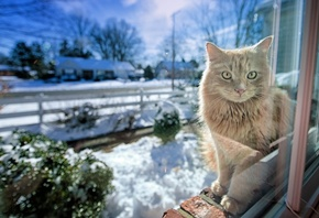 cat, waiting, snow, house