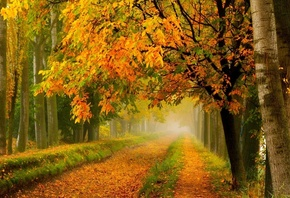 path, leaves, forest, tree, colors