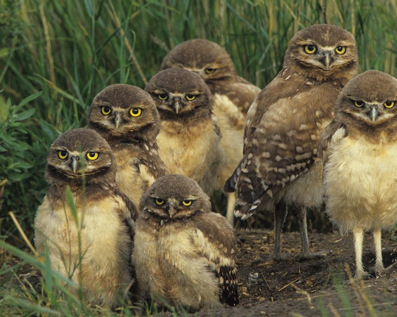 Картинки по запросу совы с птенцами