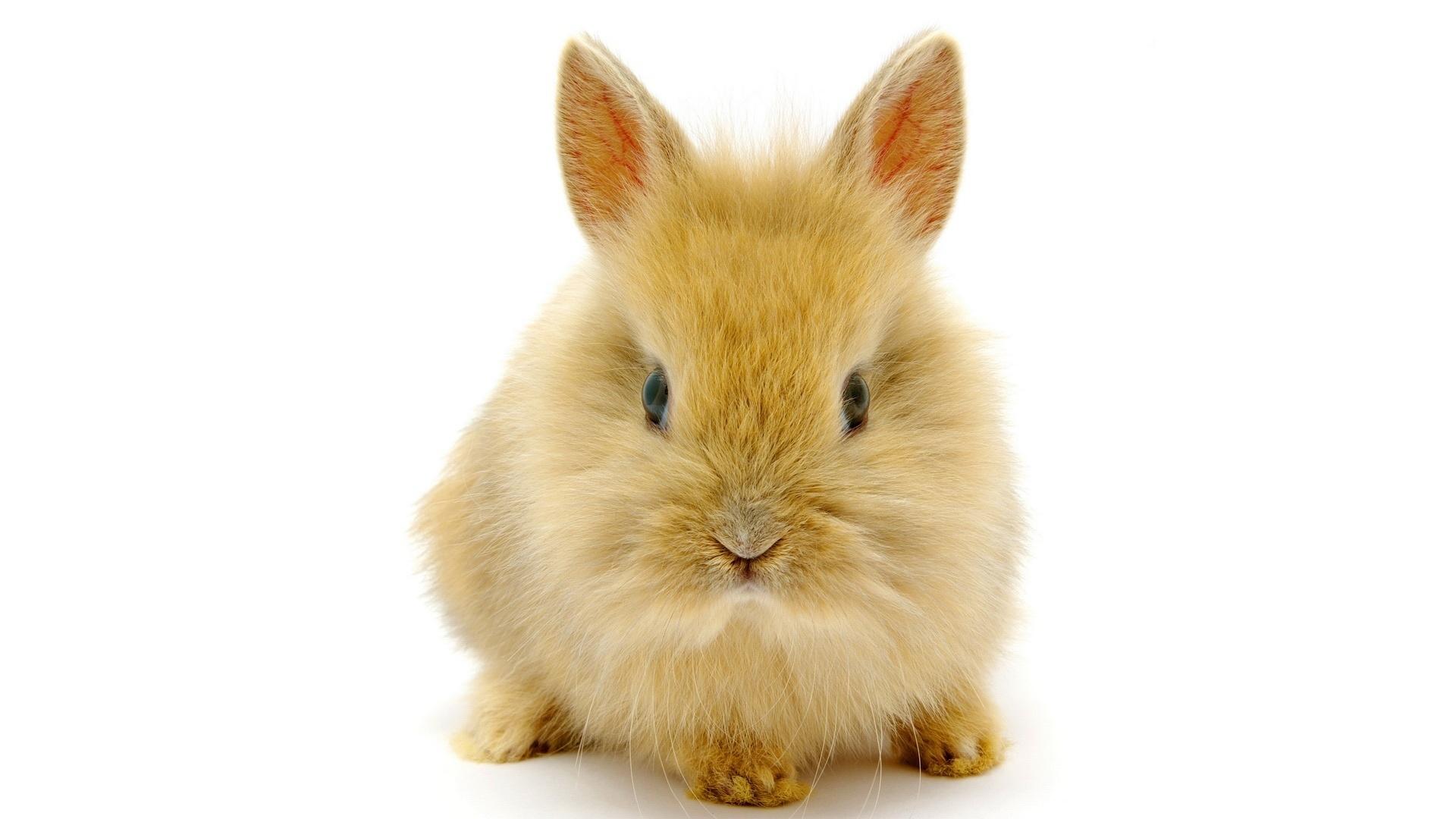 кролик дома фото