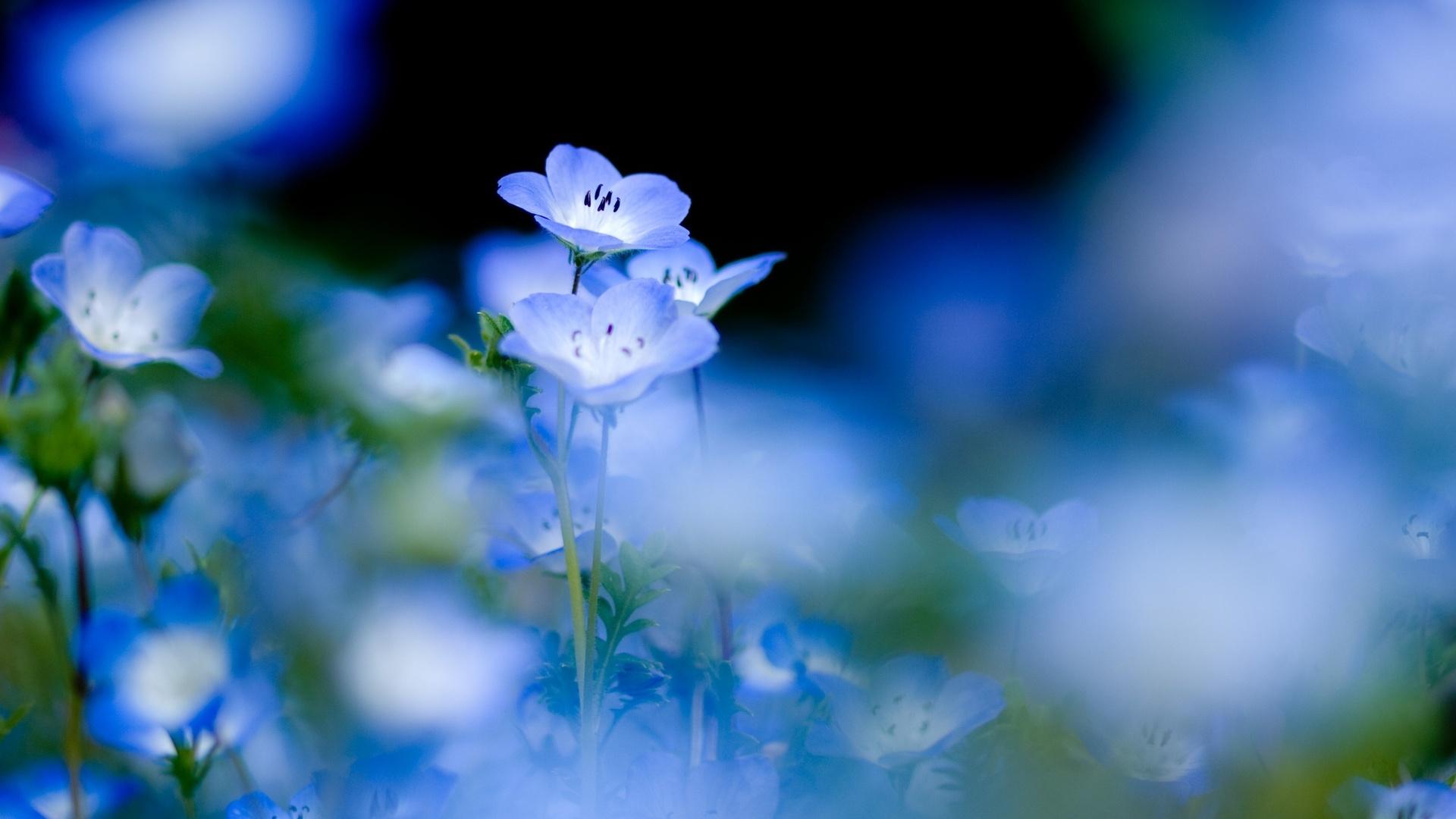 Wildblumen golubenky blumenbeete blumen foto 1920x1080 flowers
