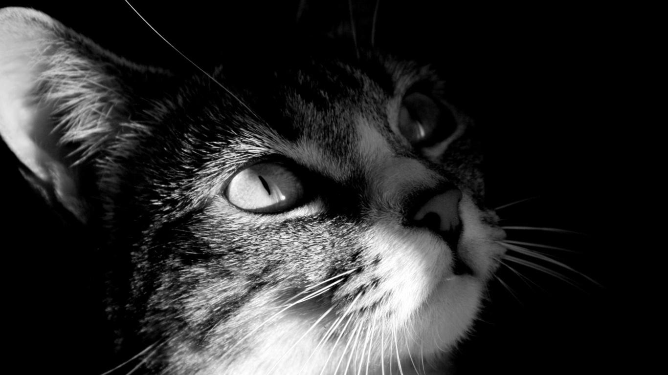 Оченята тварини фото тварини