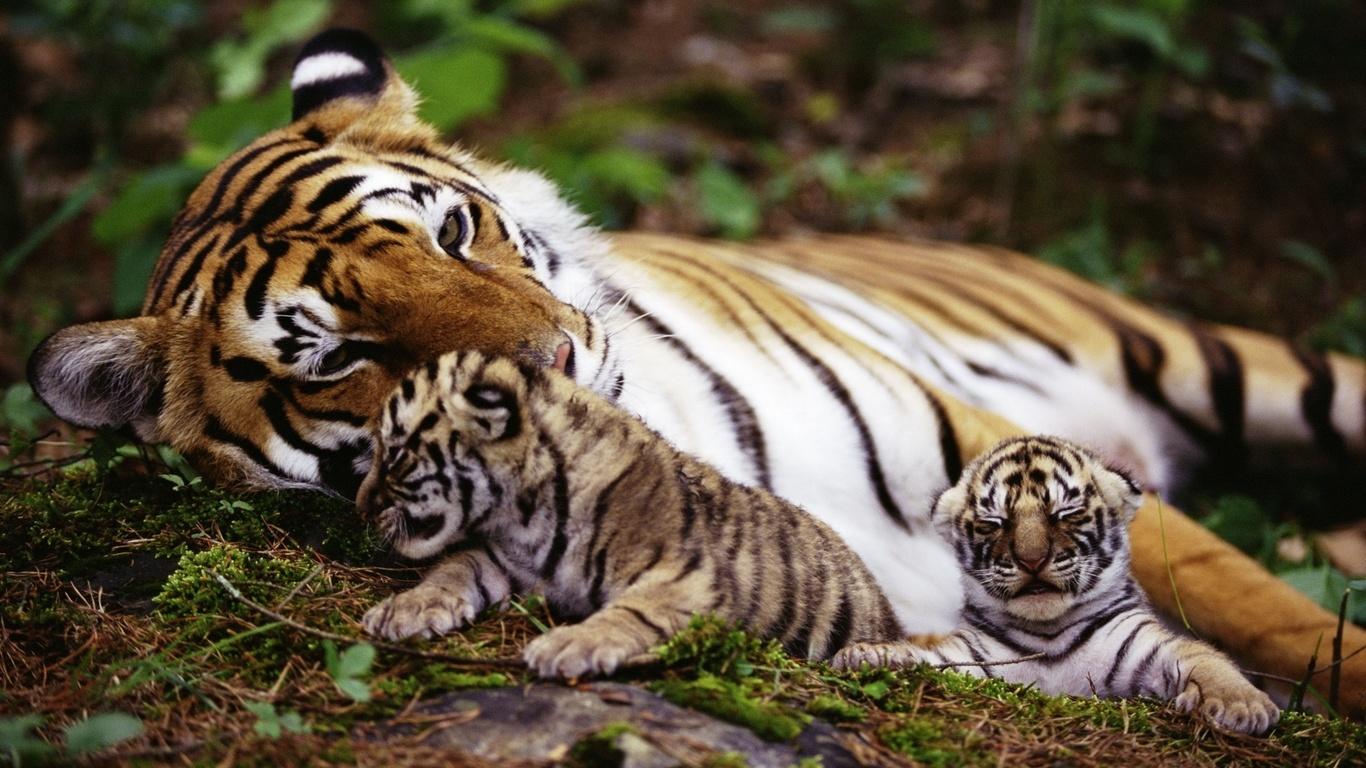 На природі тварини фото тварини