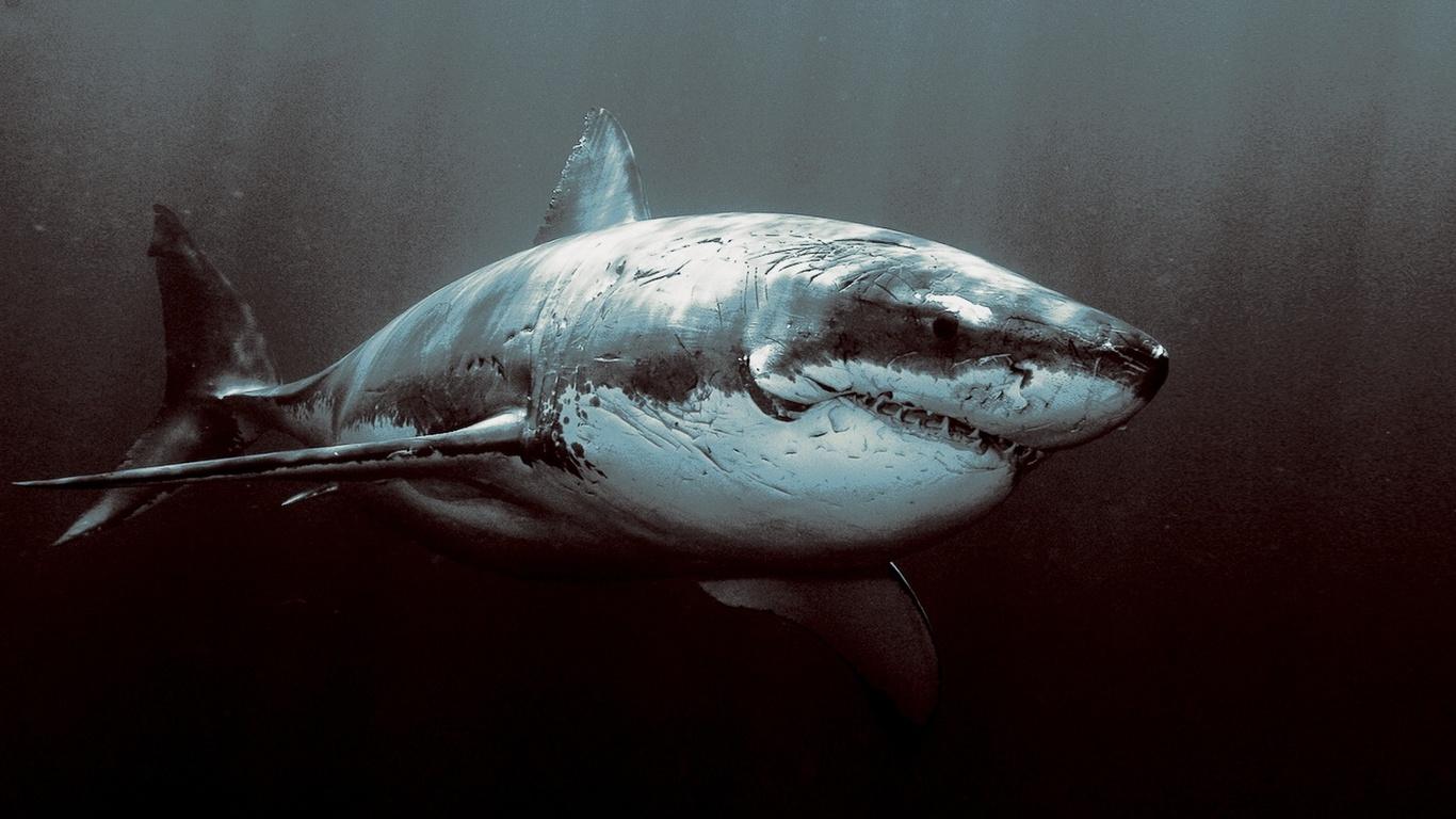 Hd duvar kağıtları köpekbalığı sualtı keskin dişleri