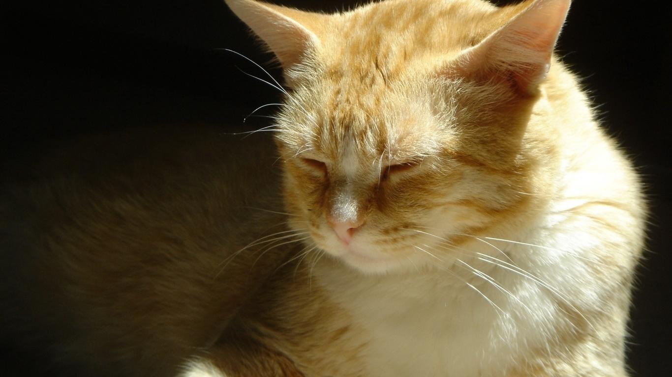 Imagenes De Animales Tiernos Con Movimientos Para Fondo De ...