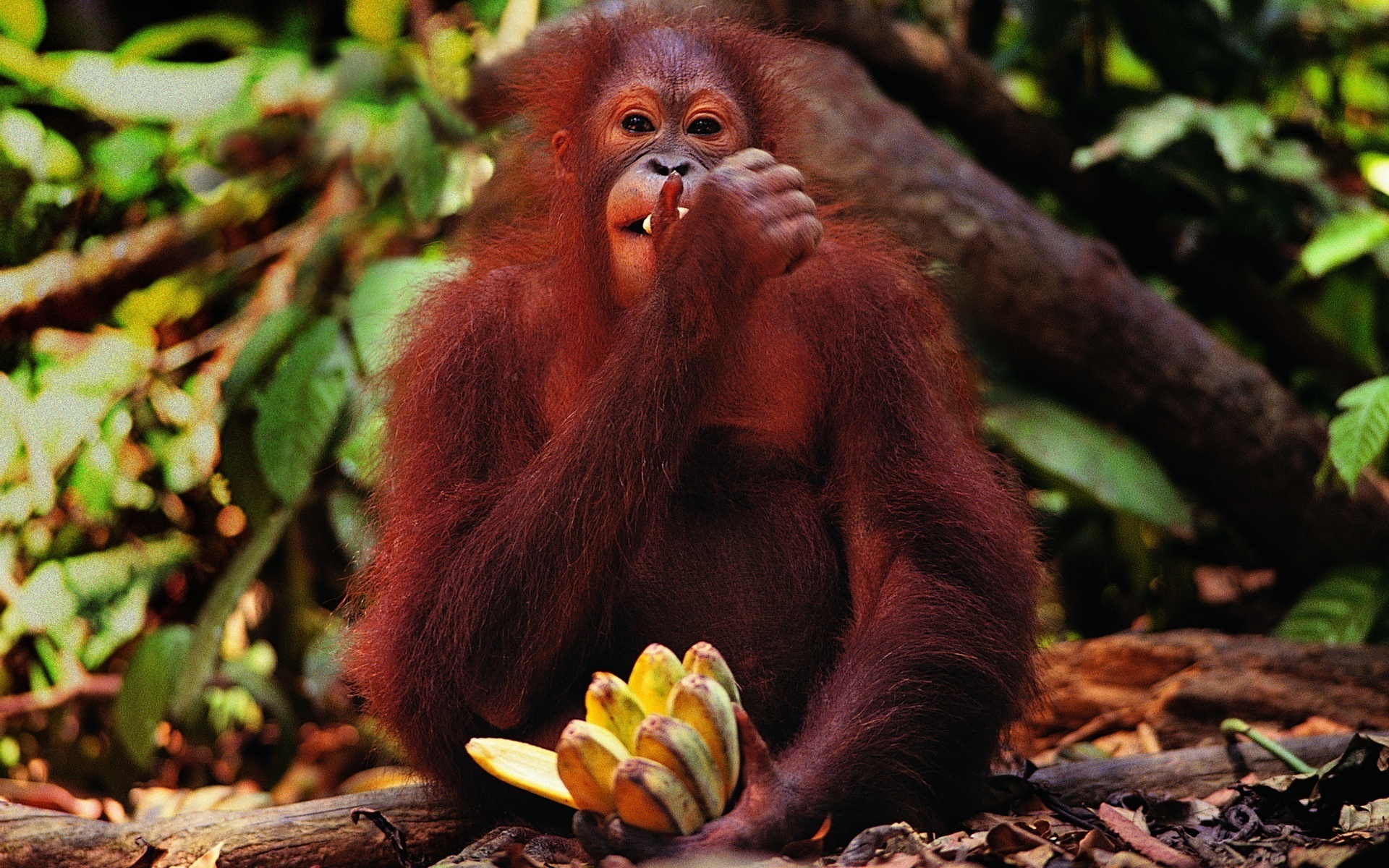картинки бананы