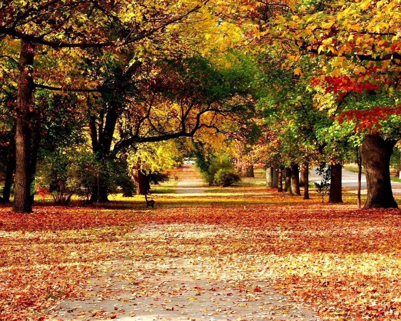 красивые обои осень на рабочий стол
