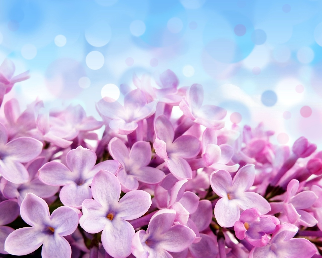 Голубой лиловые красивые фон цветы