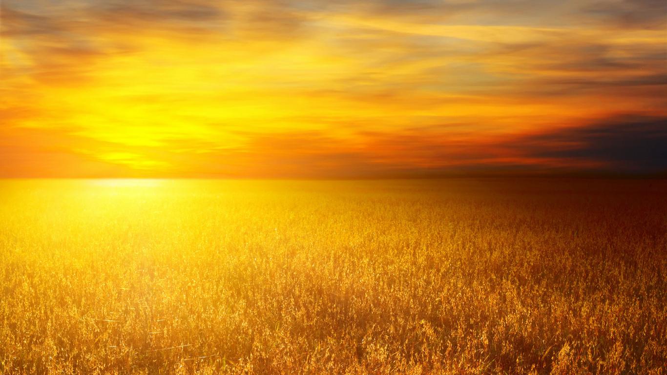 Солнце пшеничные поля пшеничное поле