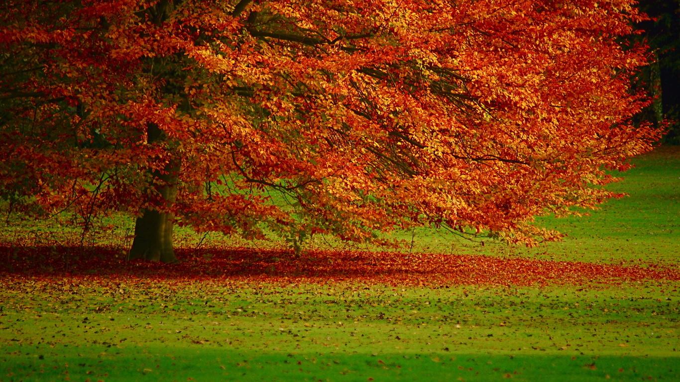 Hd шпалери дерево осінь листя осінь