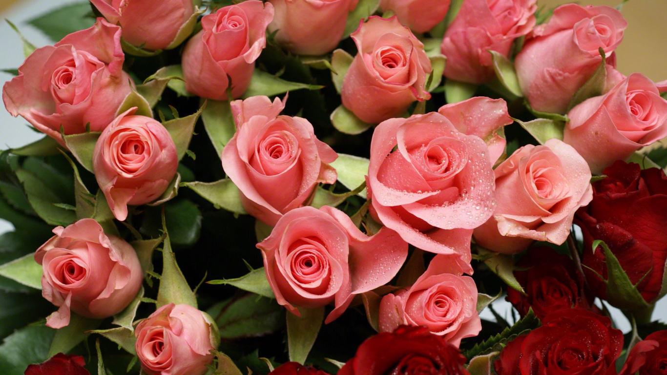 Шпалери троянди квіти різні квіти