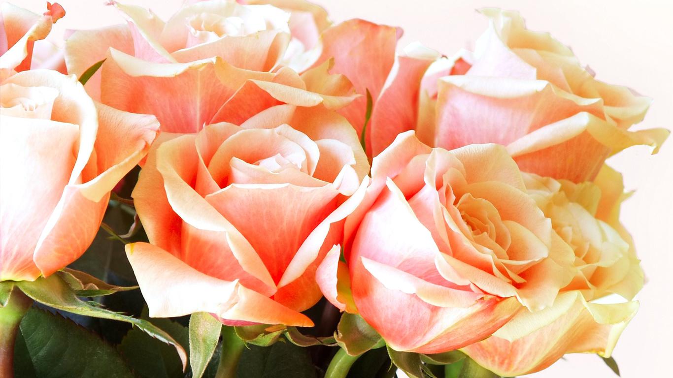 Hd duvar kağıtları buket çiçekler yaprakları gül tomurcuk