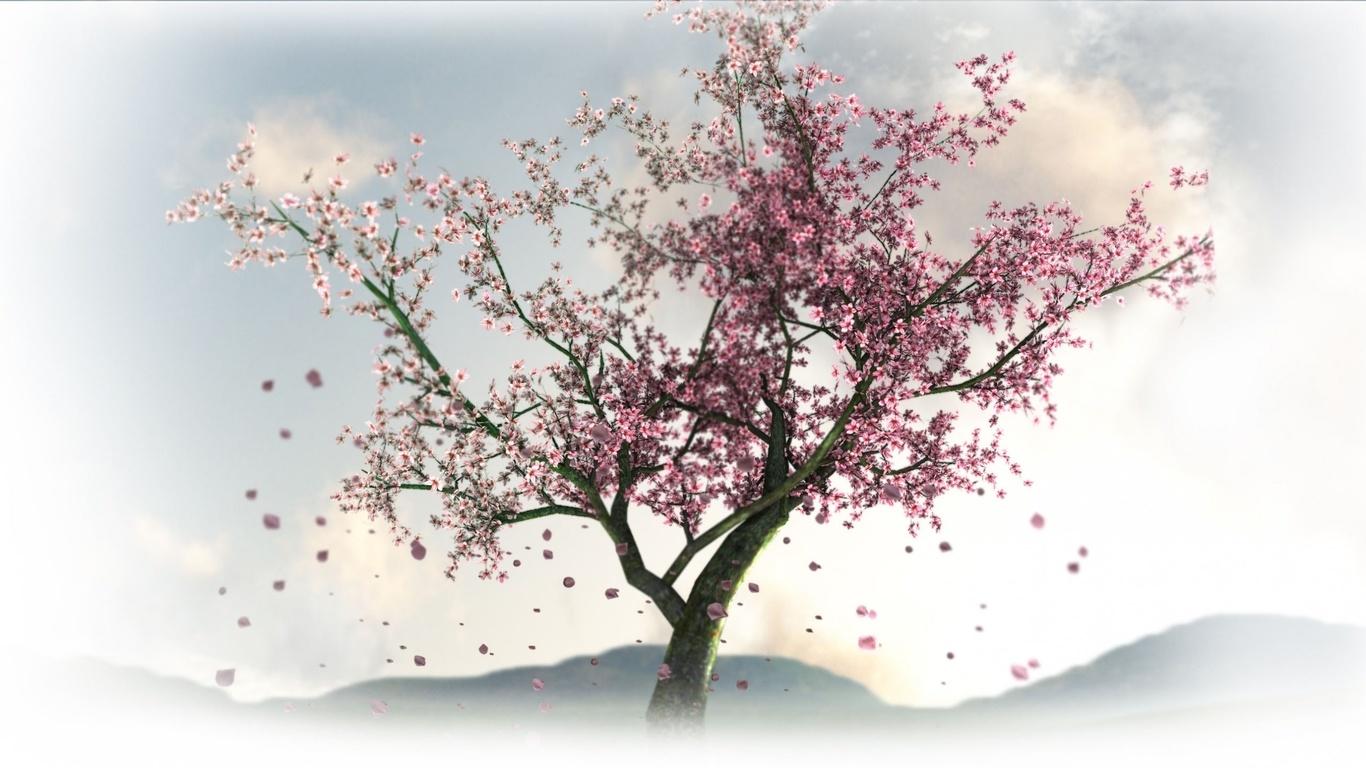 Hd duvar kağıtları bahar sakura çiçekler ağaçlar doğa