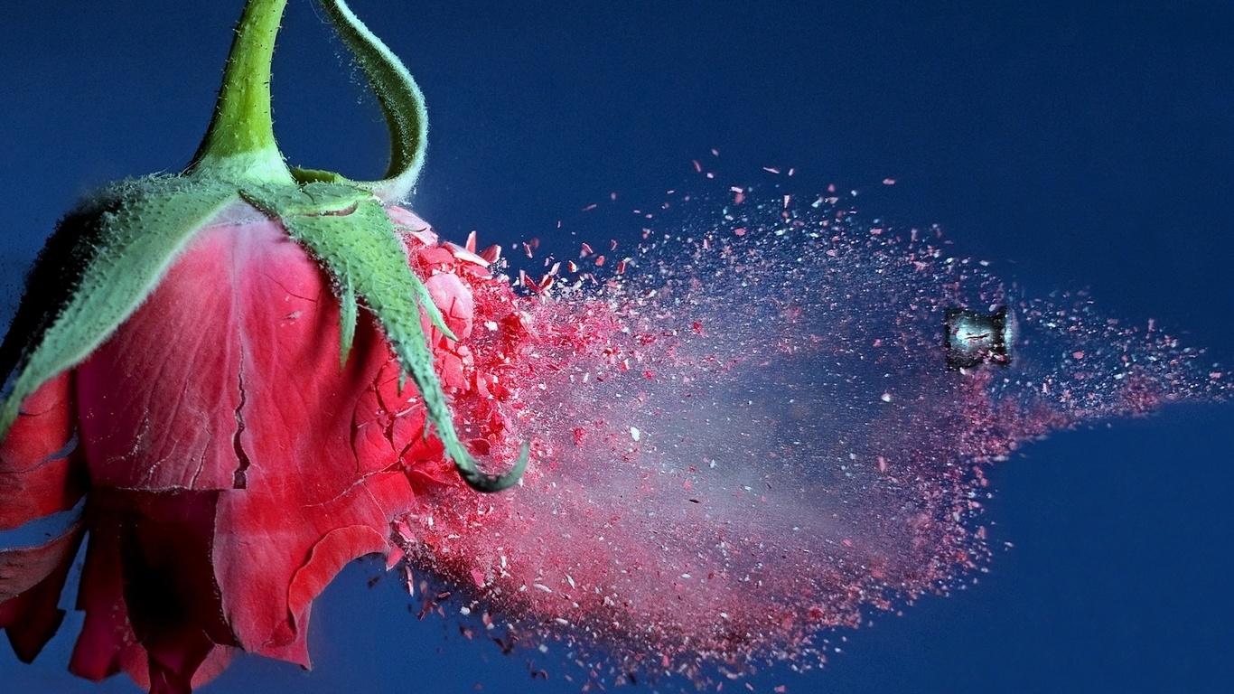 Şarapnel mermi gül uçuş çiçekler fotoğraf çiçekler