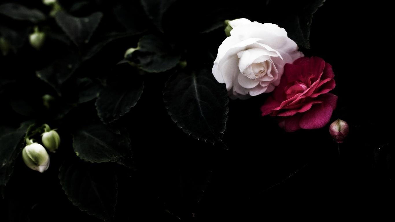 Duvar kağıtları çifti kırmızı siyah beyaz yaprakları arka
