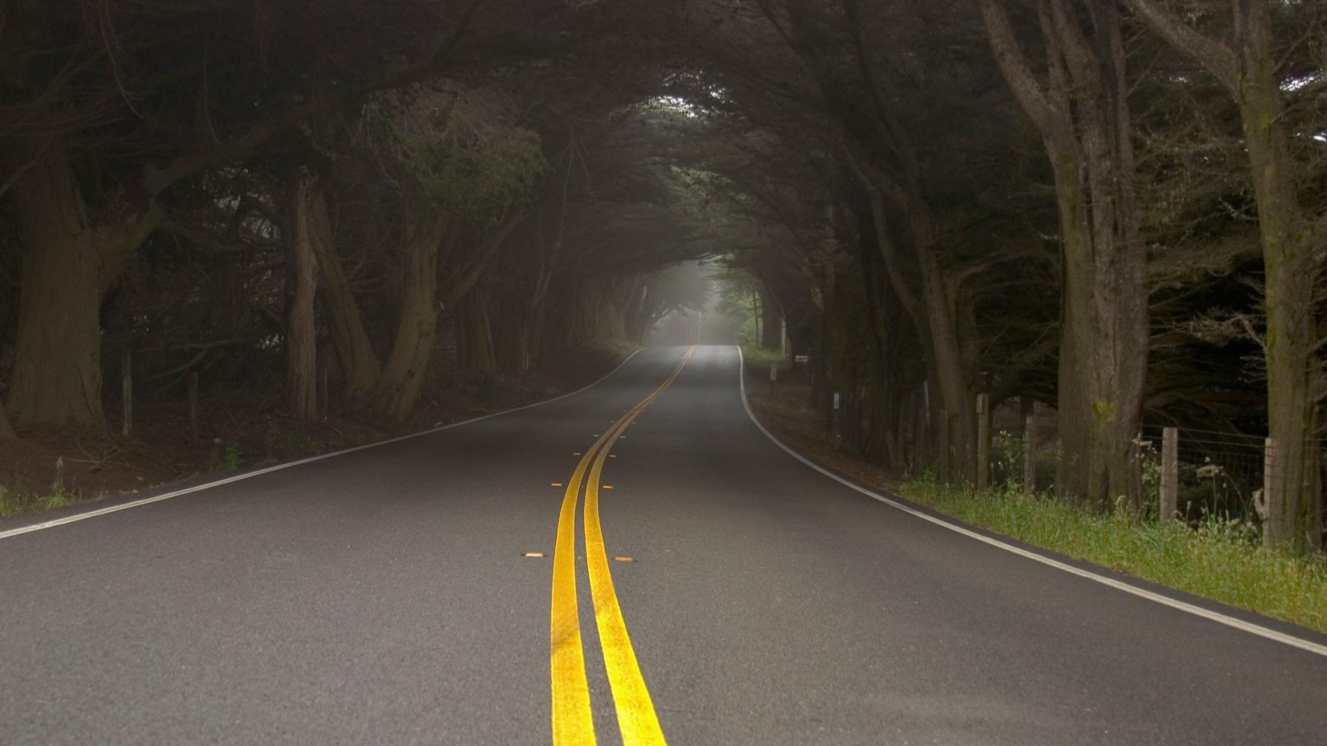 Туман природа дымка деревья дорога