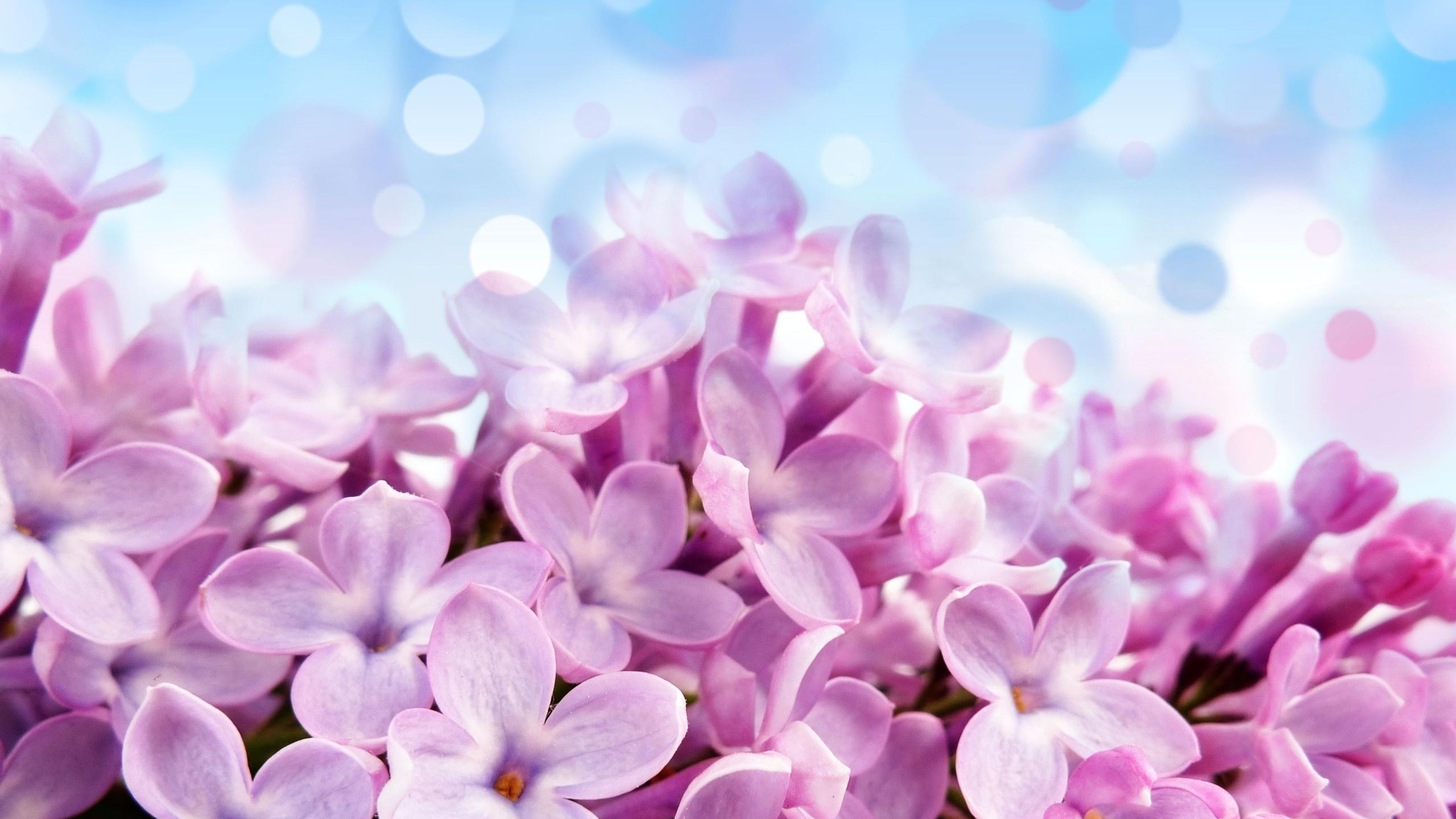 Květiny, světle červené, fialové květy, květiny, fotografie