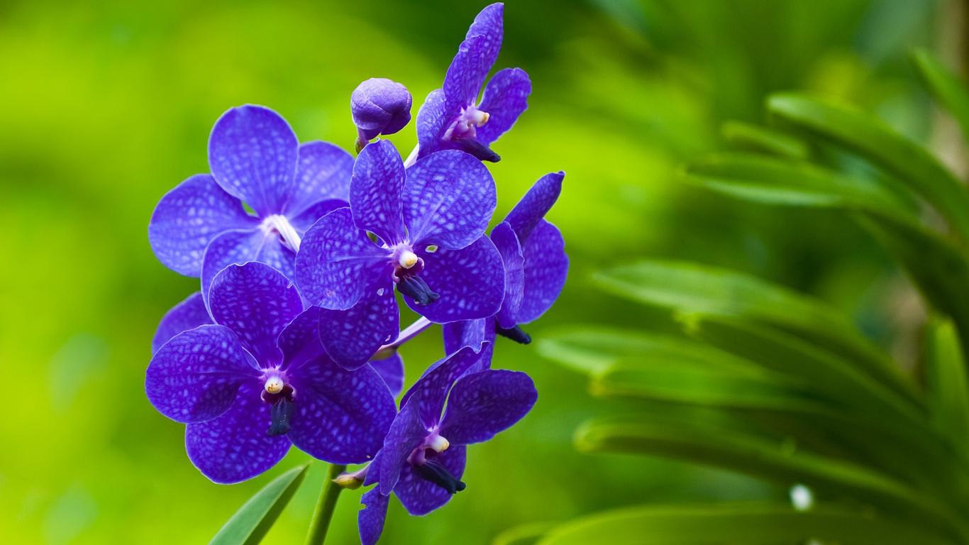 Blumen orchideen pflanzen schöne blumen foto flowers