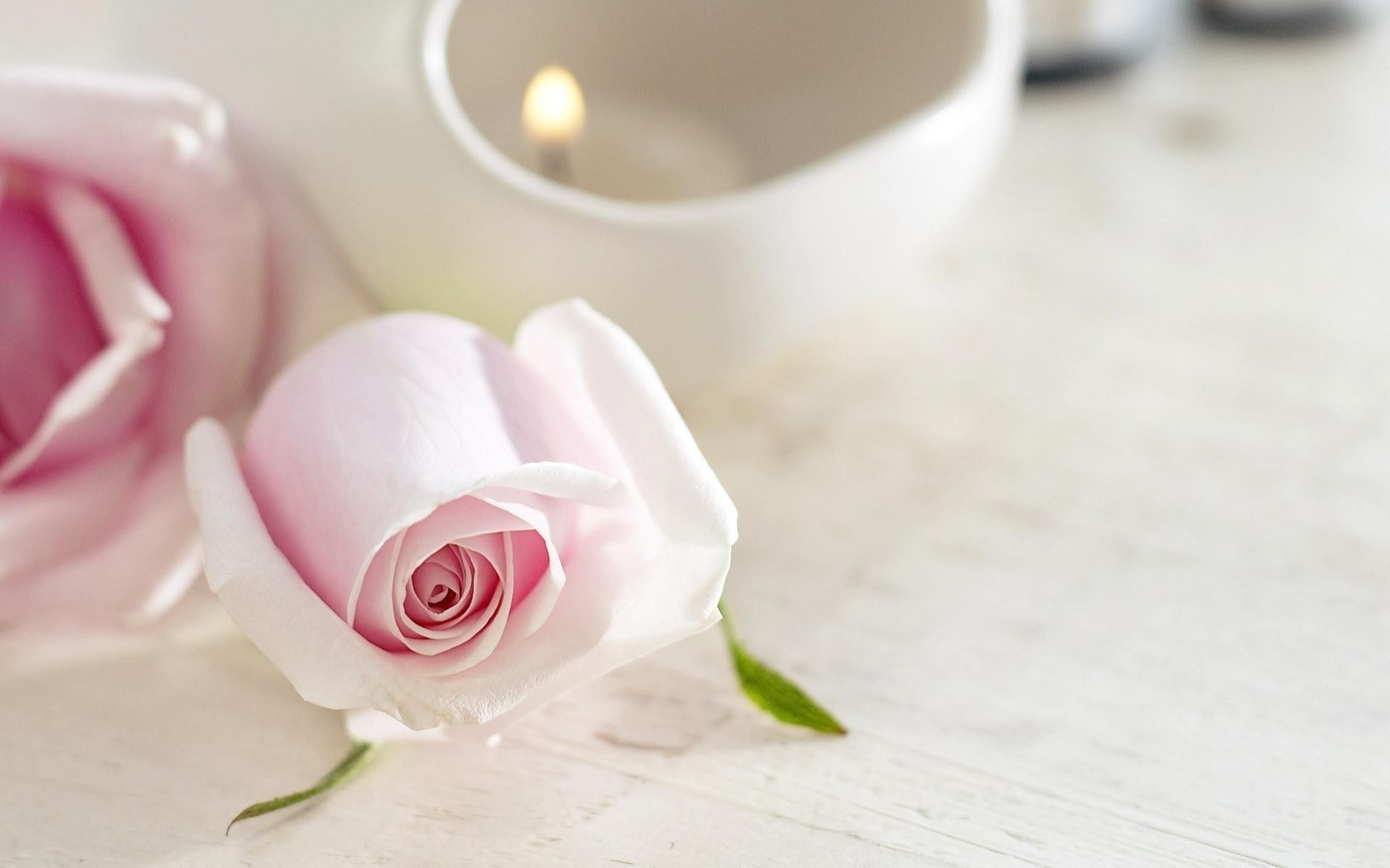Цветок, роза, свеча, нежность
