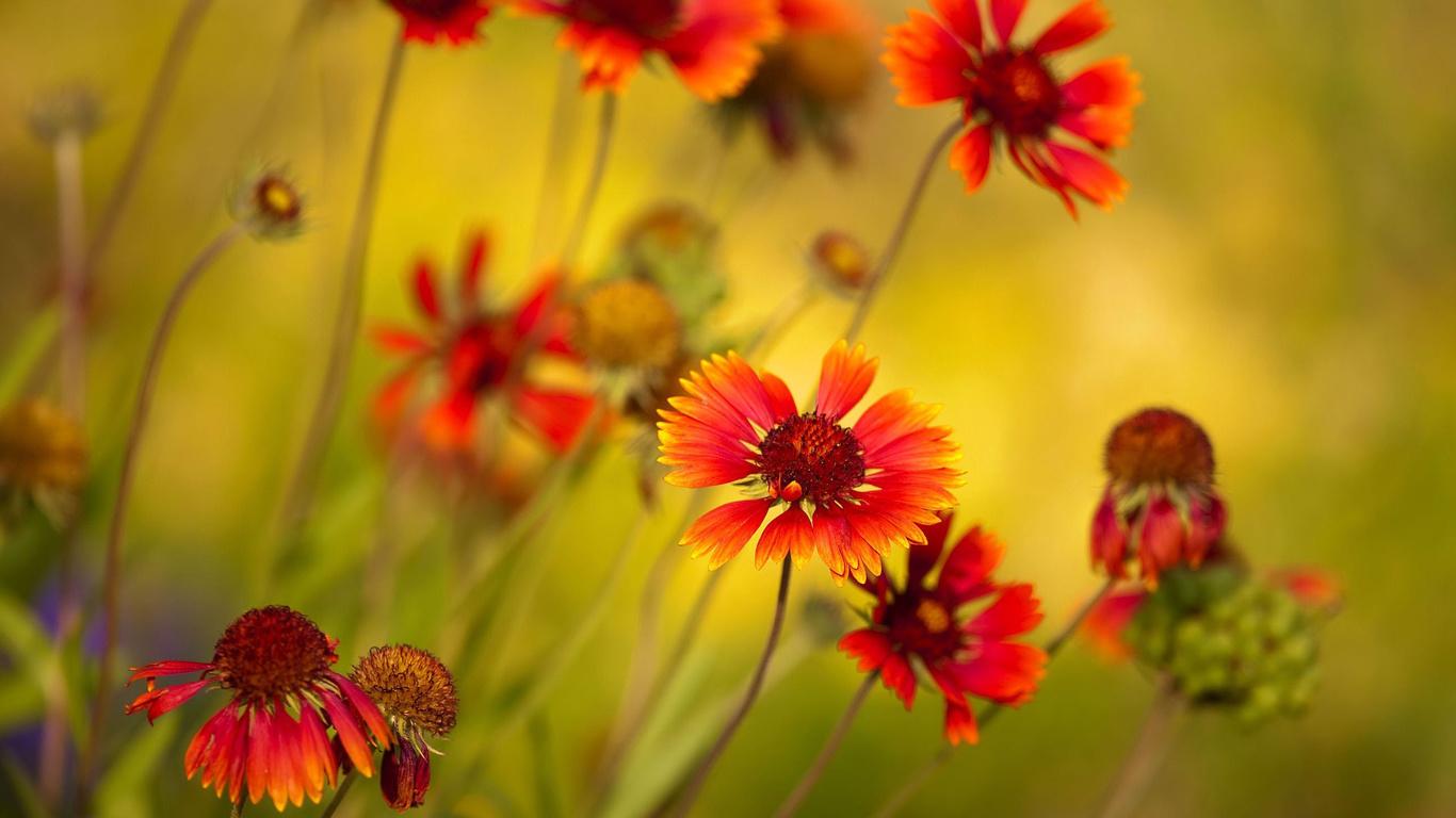 Çiçekler çiçekler güzel çiçekler fotoğraf çiçekler