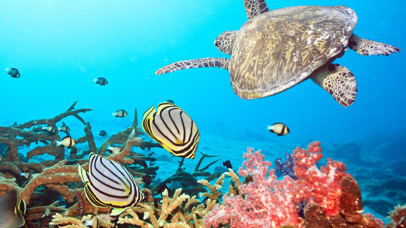 Fonds d écran de tortue poisson mer coraux les animaux photo
